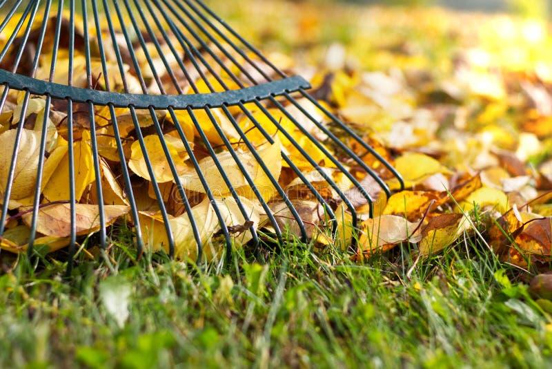 Harken von gefallenen Blättern im Garten stockbilder