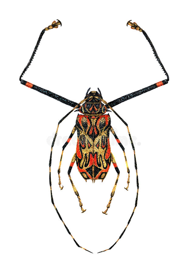 Harlekin-Käfer vektor abbildung
