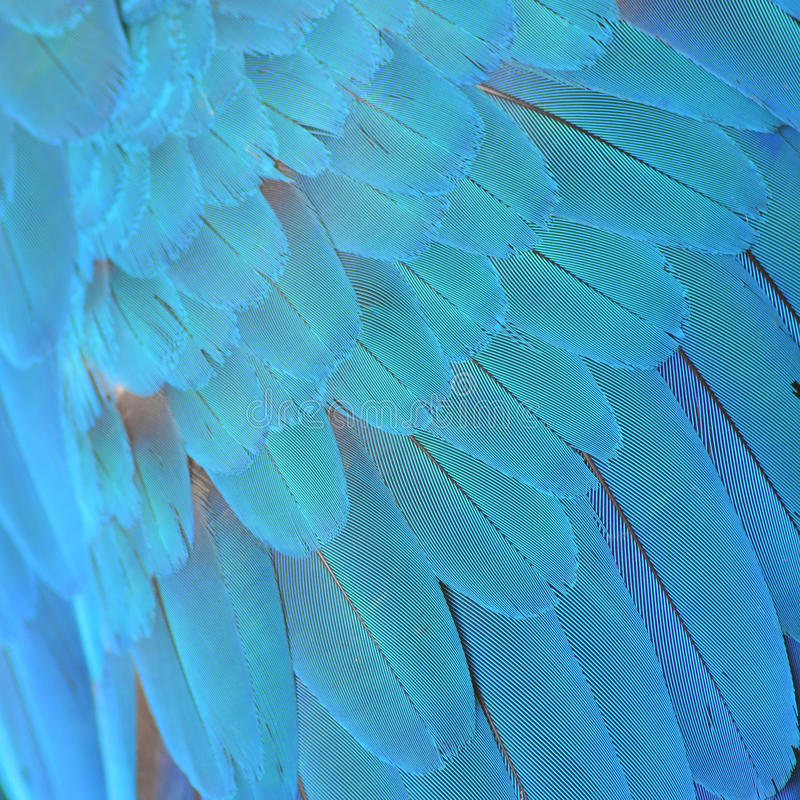 Harlequin Macaw feathers. Colorful feathers, Harlequin Macaw feathers background texture stock photography