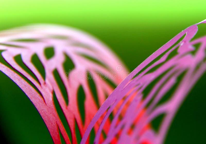 Harmoni med rosa färger och gräsplan royaltyfria foton