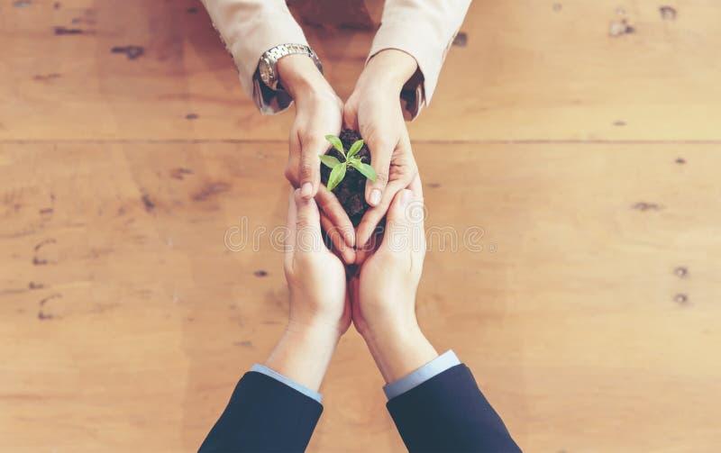 Harmonia adulta de Team Work do negócio das mãos que coloca a planta nova e que semeia Nurture para crescer ambiental e reduzir a fotos de stock royalty free