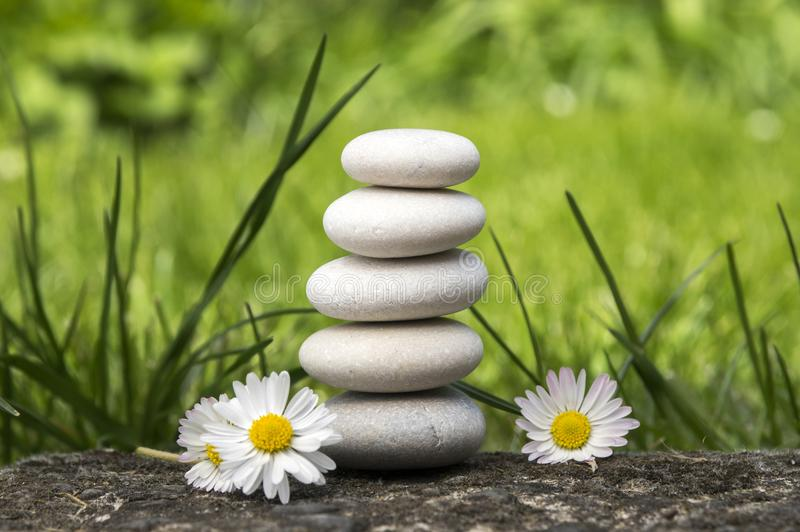 A harmonia e o equilíbrio, seixos simples elevam-se e flores da margarida na flor na grama, simplicidade, cinco pedras fotografia de stock royalty free