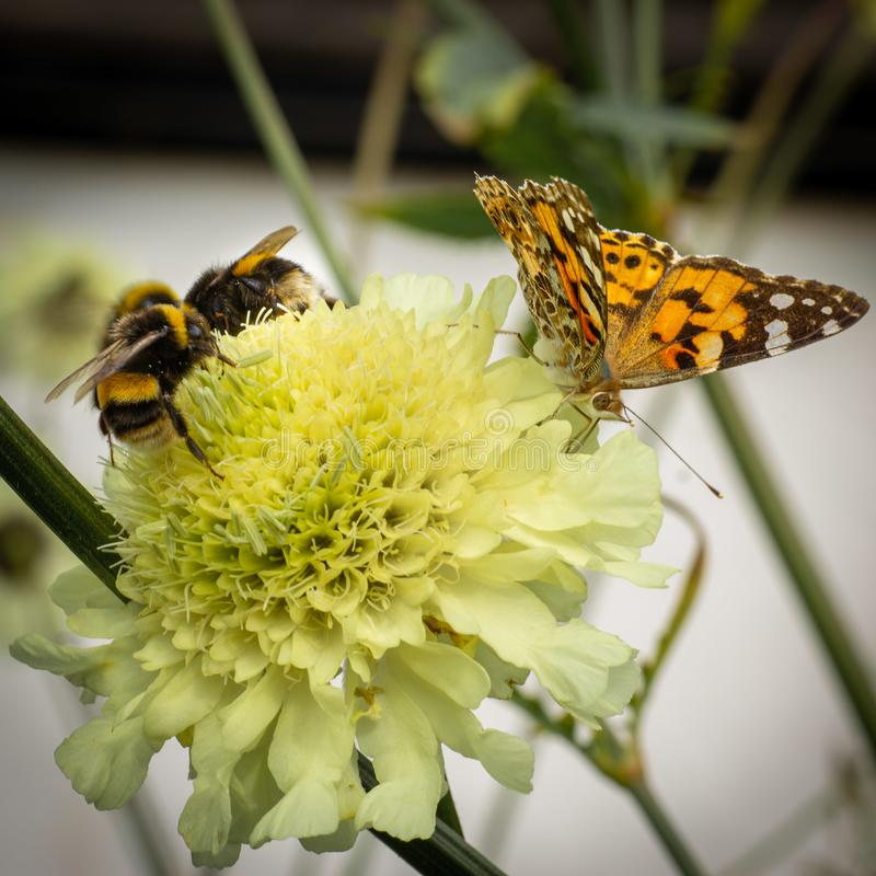 Harmonie sur une tête de fleur photos stock