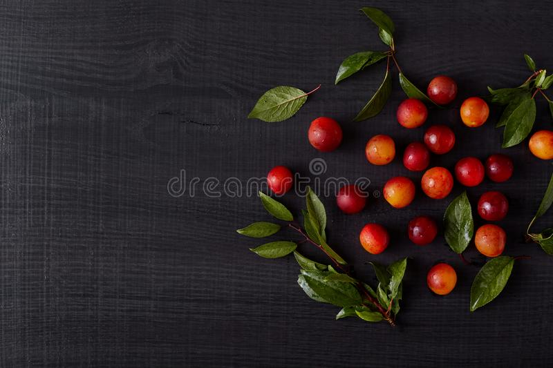 Harmonious layout made of fruit with green leaves. Many yellow red ripe cherry plums being close to each other, having small stock images