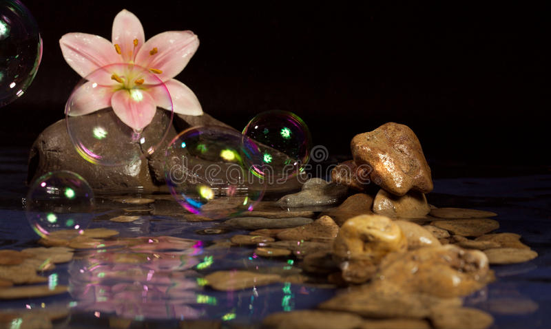 Download Harmony stock photo. Image of lilies, reflection, decoration - 10070464