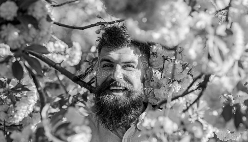 Harmony concept. Man with beard and mustache on smiling face near flowers. Bearded man with stylish haircut with flowers. Of sakura on background. Hipster in stock image