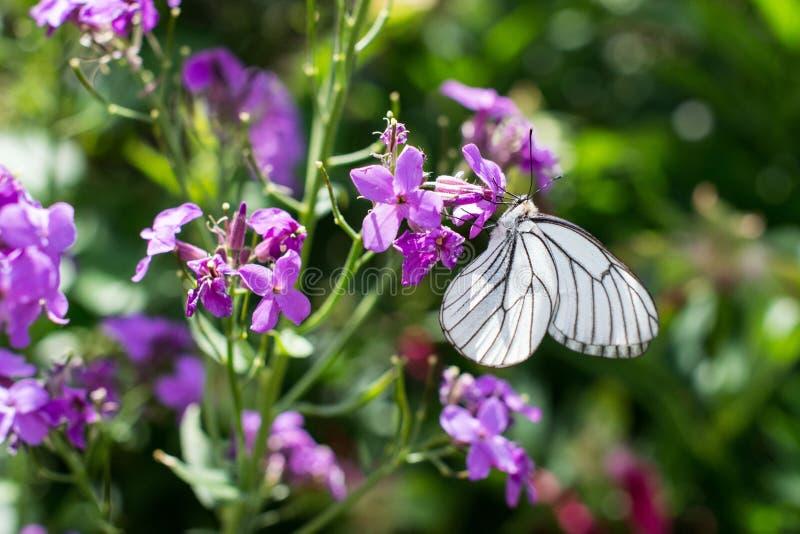 Harmony of flower. stock photo