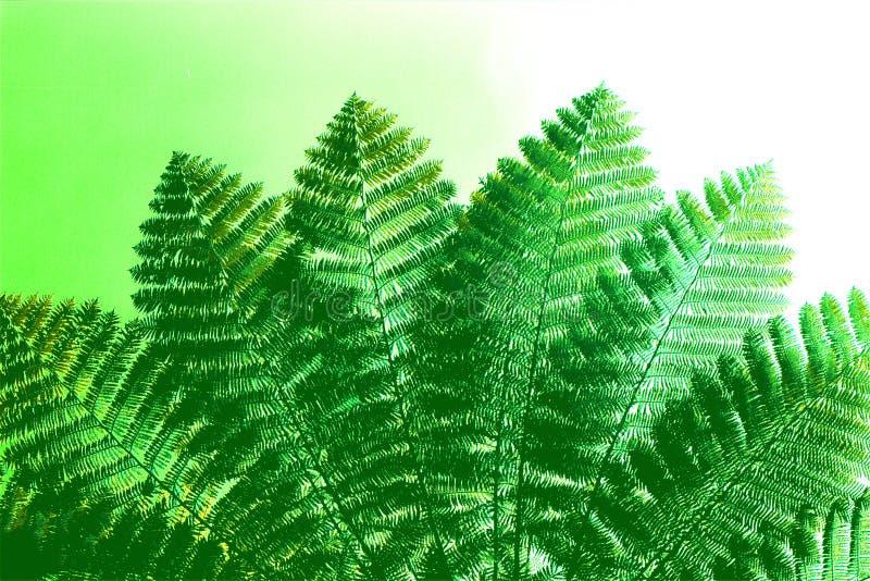 Harmony In Green arkivfoto