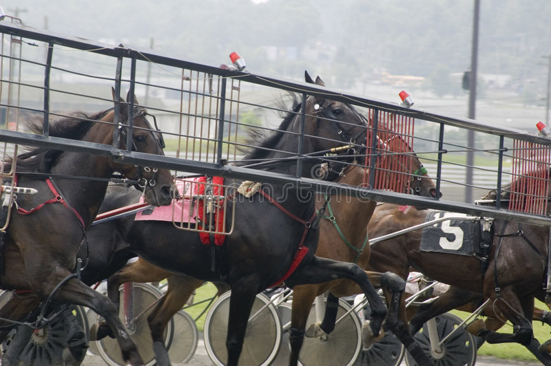 Download Harness race-1 stock photo. Image of determination, gate - 1361686