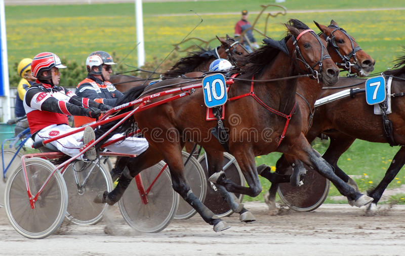 Harness race horses royalty free stock images
