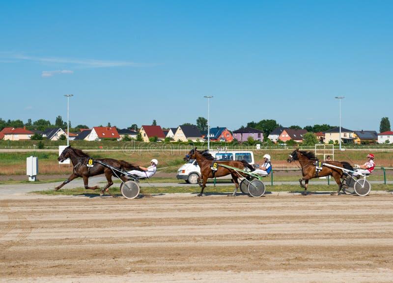 Harness Racing on Karlshorst racetrack royalty free stock photo