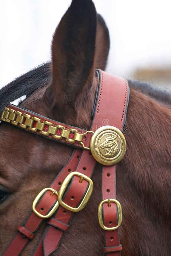 Harnessed horse. horse harness. leather and metal products, handmade. royalty free stock photo