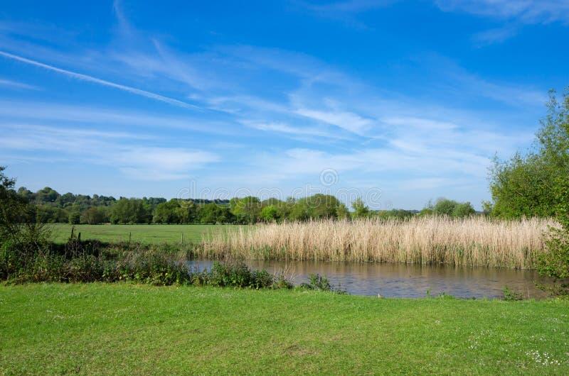 Harnham vattenäng, Salisbury, England royaltyfria bilder
