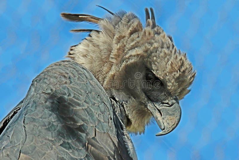 Harpyörn royaltyfri bild