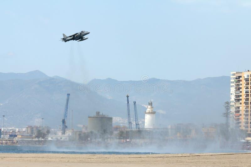 Harrier do mar imagem de stock