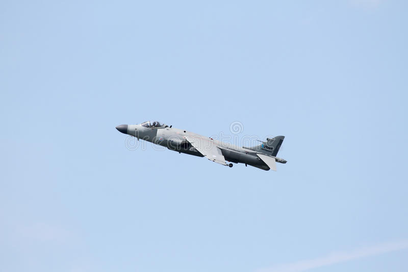 Harrier do mar fotografia de stock