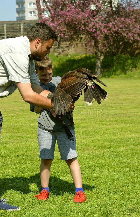 Harris Hawk falconer met een kind stock fotografie
