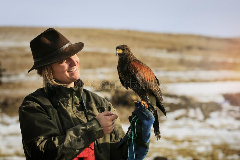 Harris` hawk on the falconer`s hand, winter landscape on the backround. Predator, birds, parabuteo royalty free stock photos