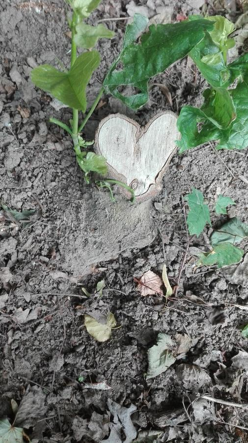Hart in aard - boomboomstam in de vorm van een hart stock foto