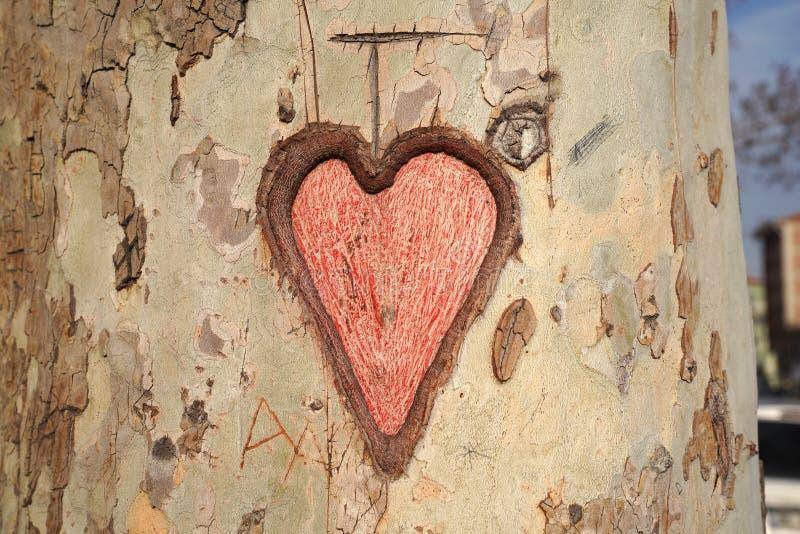 Hart dat in boomboomstam wordt gesneden stock afbeeldingen