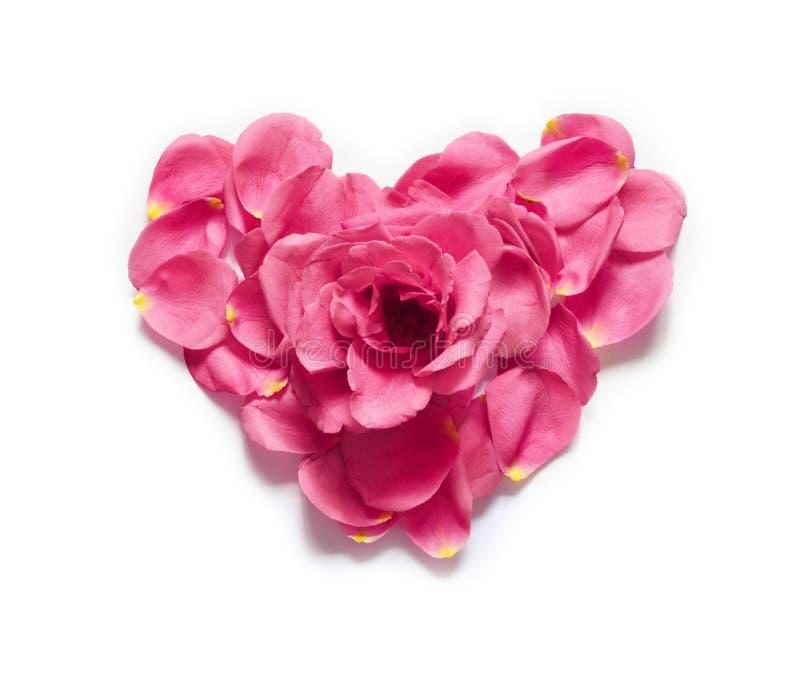 Hart dat van roze bloemblaadjes wordt gemaakt Rood nam bloemblaadjeshart over witte achtergrond toe Hoogste mening met exemplaarr royalty-vrije stock fotografie
