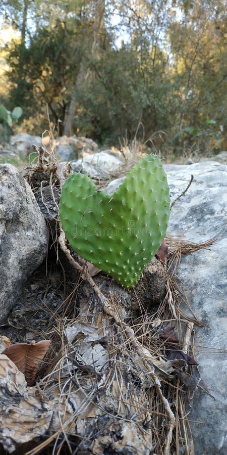 Hart gevormde cactus Verbazende Aard royalty-vrije stock fotografie