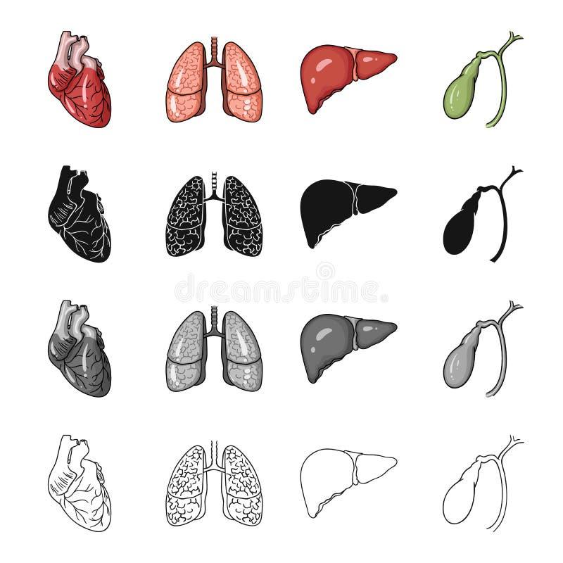 Hart, intern orgaan, long van een persoon, lever, galblaas Menselijke organen geplaatst inzamelingspictogrammen in beeldverhaalzw stock illustratie
