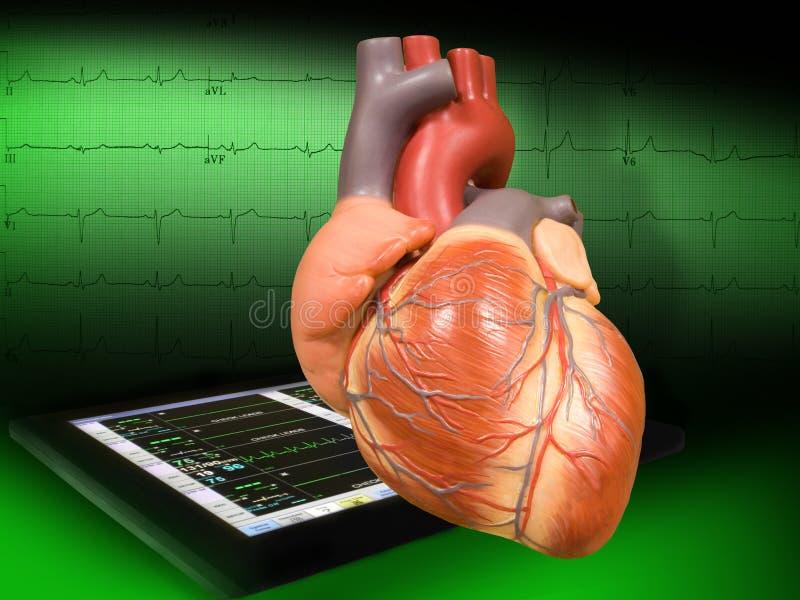 Hart met electrocardiogram stock foto