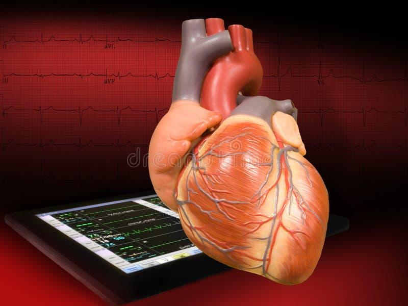 Hart met electrocardiogram stock foto's
