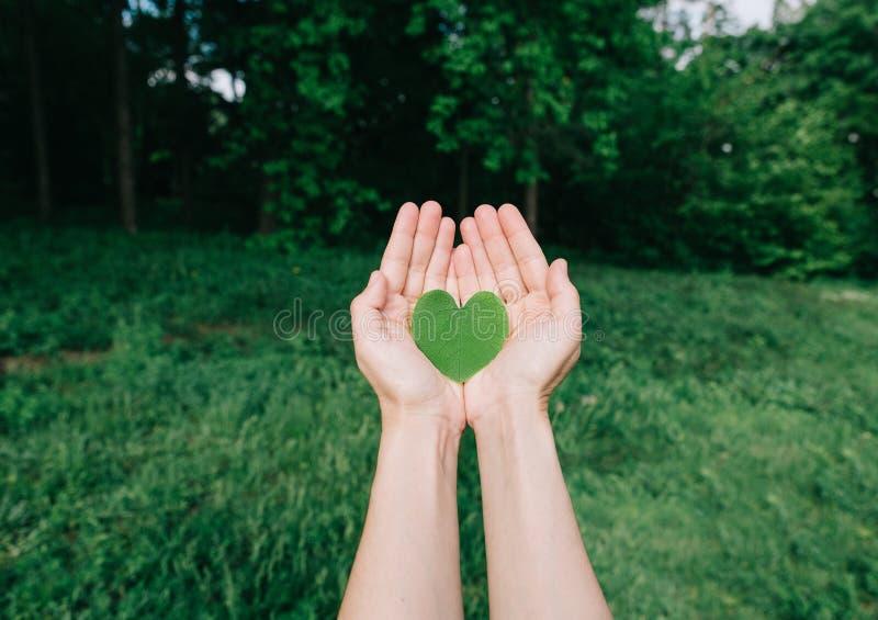hart van groene bladeren in palmenmensen stock afbeelding