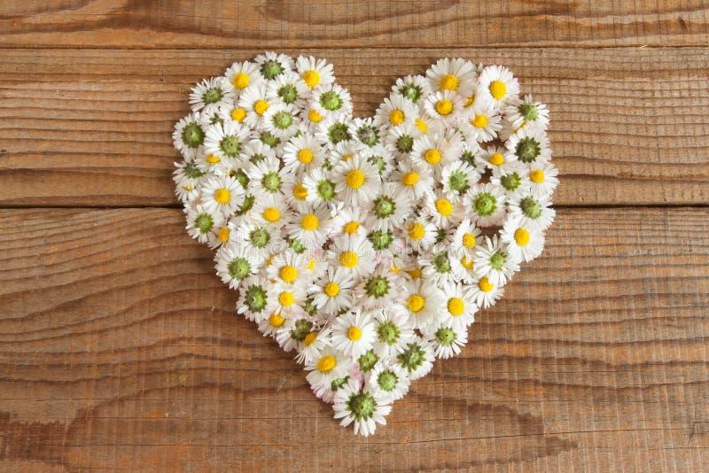 Hart van madeliefjesbloemen die wordt gemaakt stock afbeeldingen