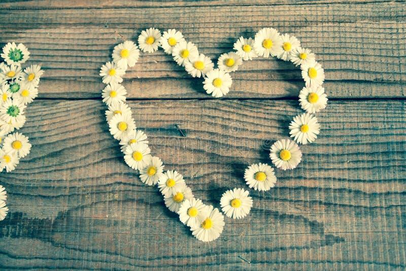 Hart van madeliefjesbloemen die wordt gemaakt stock foto