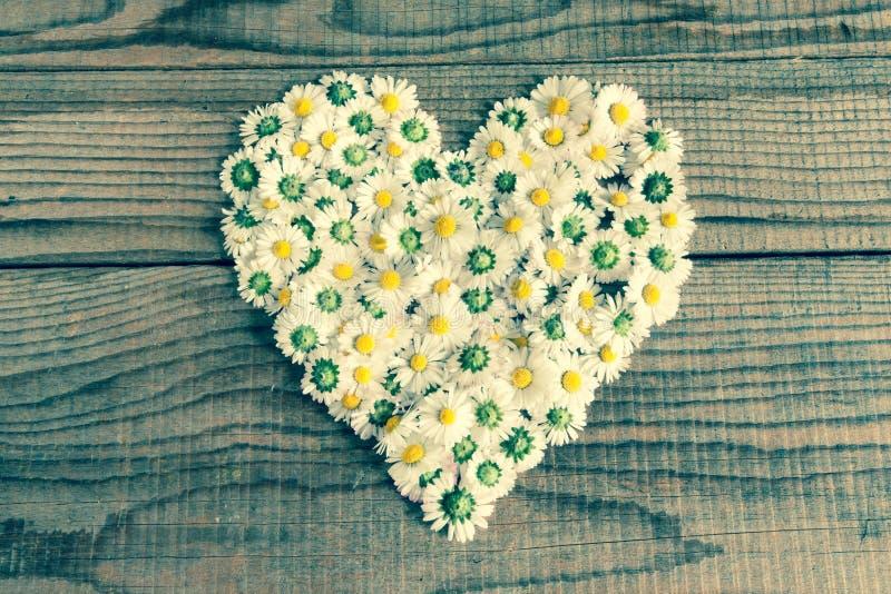 Hart van madeliefjesbloemen wordt gemaakt op houten achtergrond die royalty-vrije stock afbeeldingen