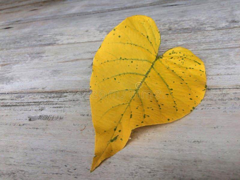Hart-vormige gele bladeren op oude houten raad royalty-vrije stock afbeeldingen