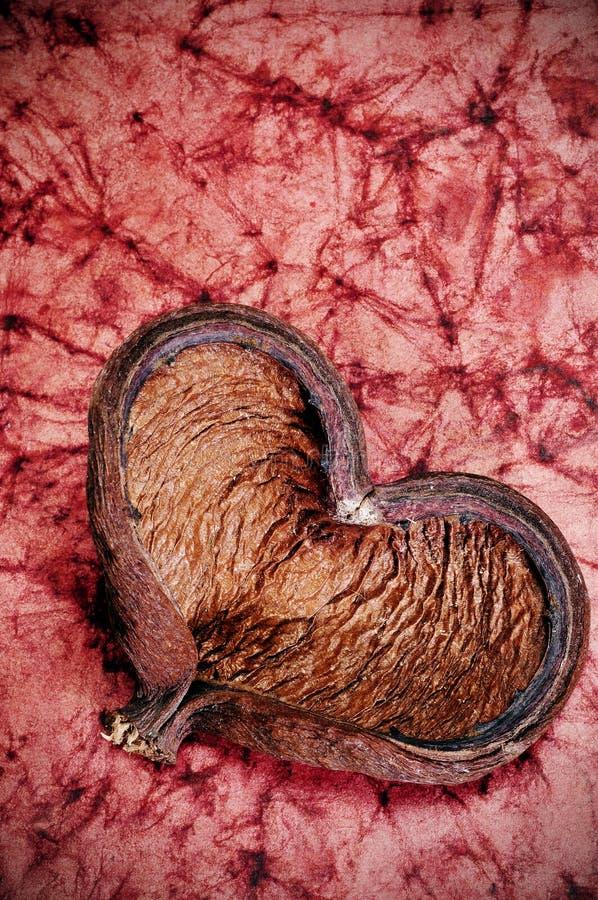 Hart-vormige shell royalty-vrije stock fotografie