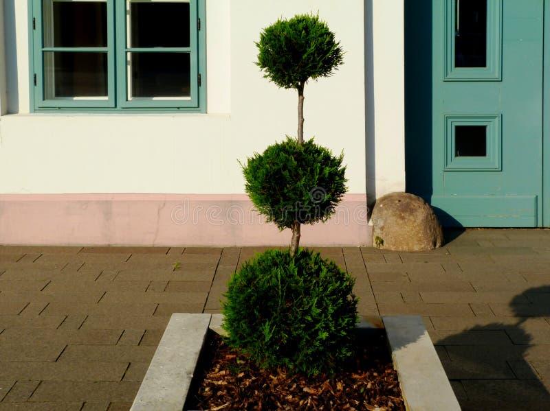 harte Landschaftsgestaltung des Steinpflanzerdetails mit formal getrimmtem immergrünem Strauch stockfoto