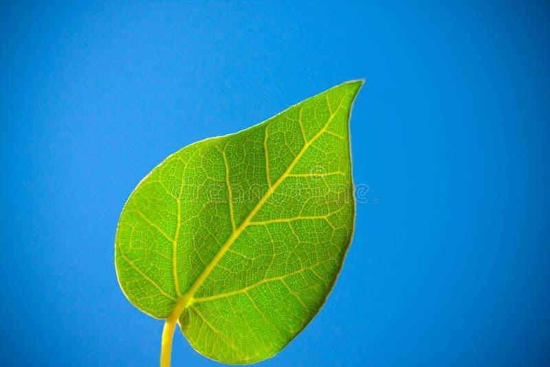 Hartelijk blad