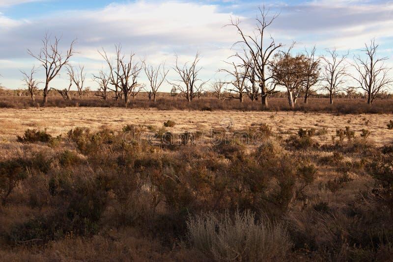 Hartes trockenes Land in der Dürre stockfotografie