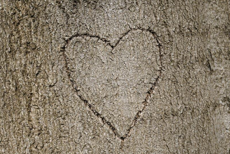 Hartvorm in boom wordt gesneden die royalty-vrije stock foto
