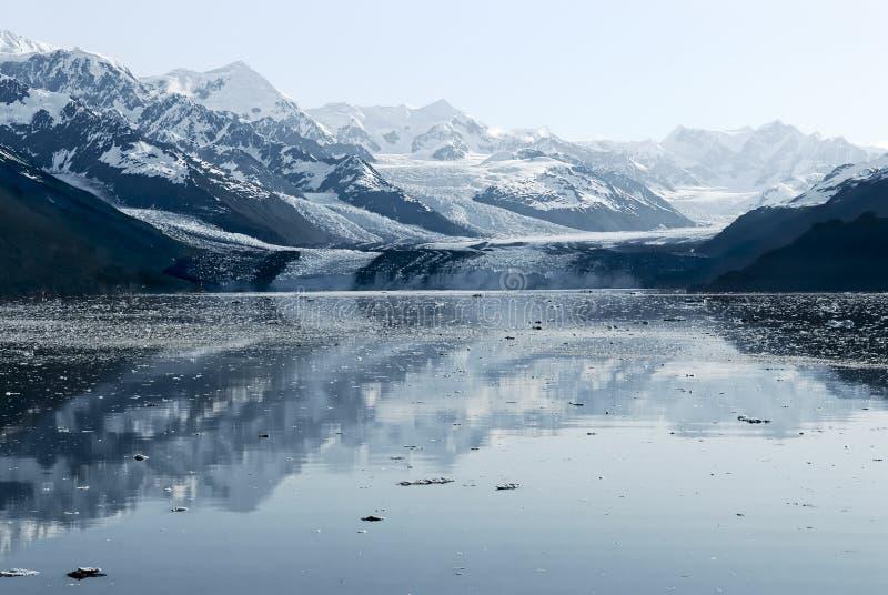 Harvard glaciär på högskolafjorden, Alaska royaltyfri bild