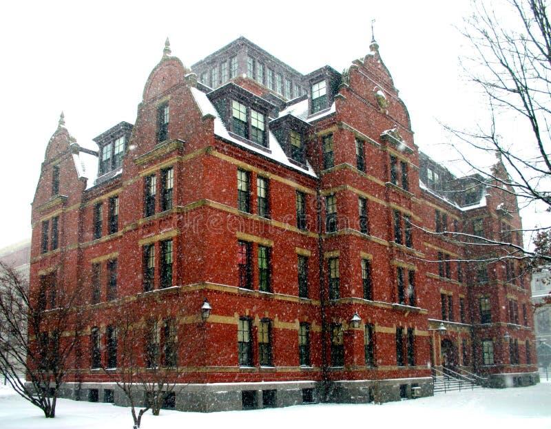 Harvard no inverno imagens de stock royalty free