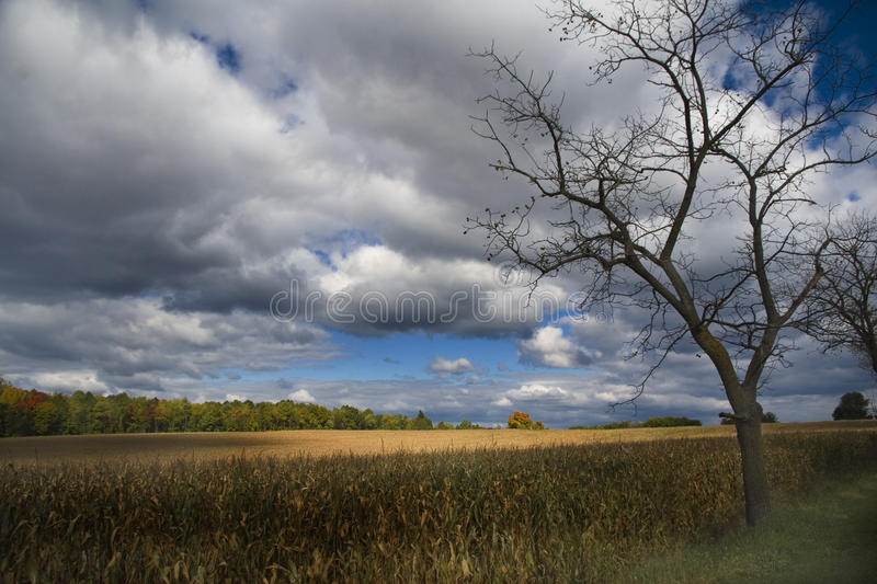 Download Harvest stock image. Image of autum, farm, trees, produce - 11843715