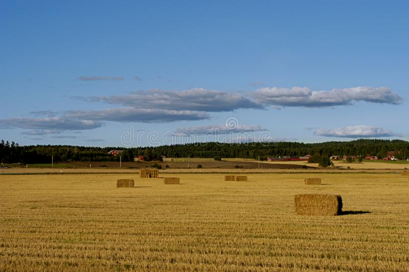 Download After the harvest stock photo. Image of field, gathering - 1589850