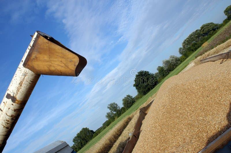 Harvest. Summer harvest on field in Czech republic royalty free stock photos