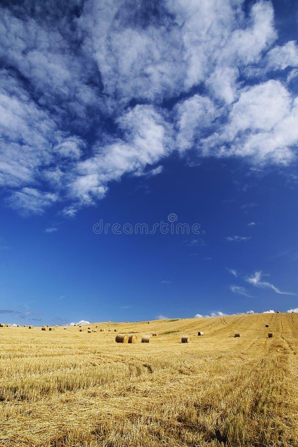 Download Harvest stock photo. Image of corn, baking, harvest, manufacturing - 20688684