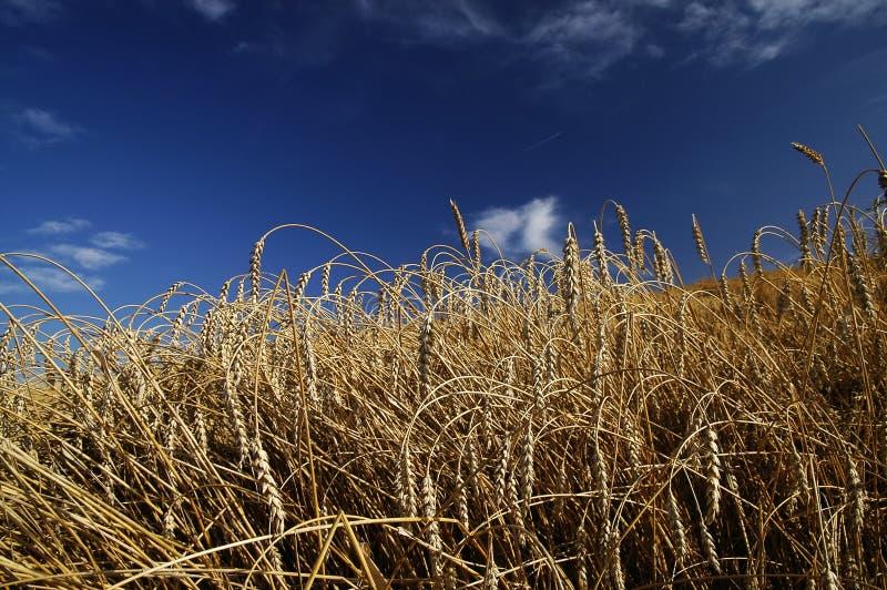 Download Harvest stock image. Image of harvest, field, baking - 20688881
