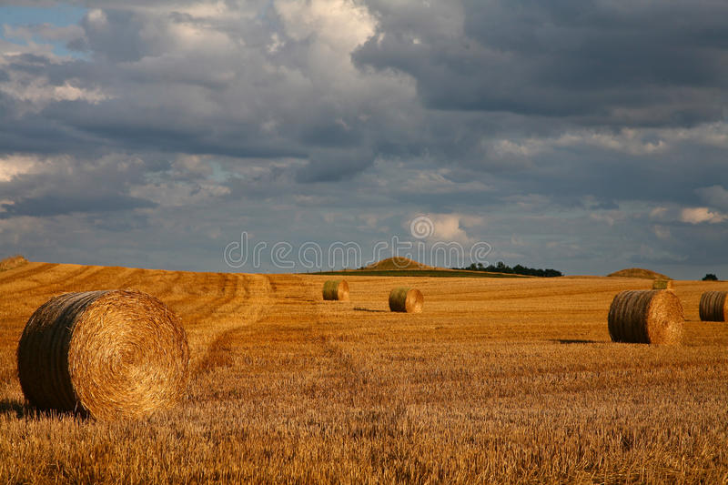 Harvest. Nature in south Sweden in the province of Sk�ne, fields after harvest royalty free stock image