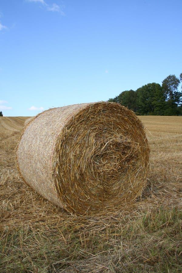Download Harvest stock image. Image of straw, balls, scene, plenty - 220537