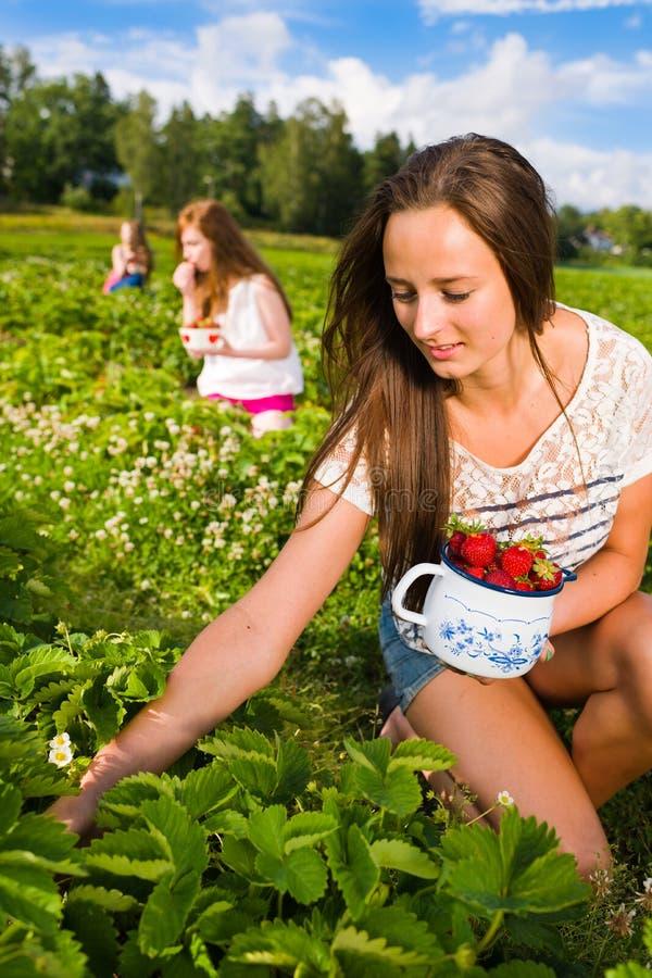 Download Harvest stock image. Image of girl, farm, field, fruit - 25780097