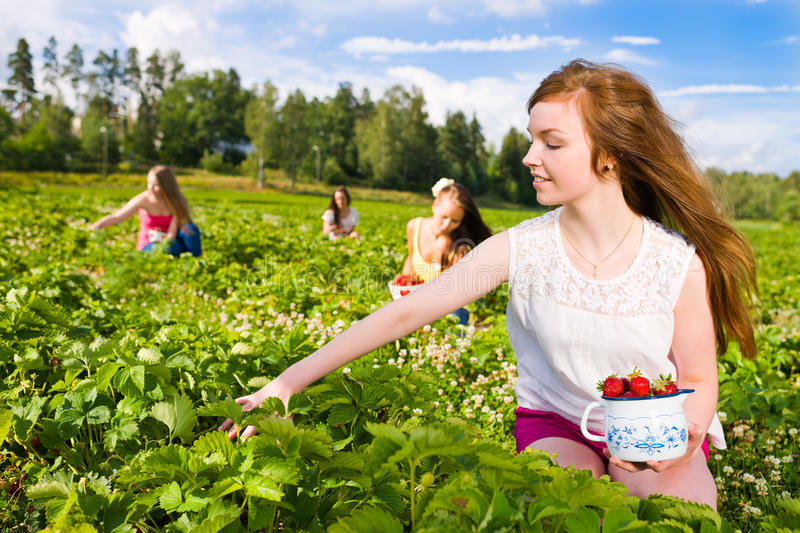 Download Harvest stock image. Image of organic, harvesting, outdoor - 25780213